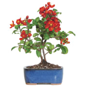 As one of its daily deals, Amazon cuts up to 44% off a selection of Bonsai plants. Plus, Prime members bag free shipping on all orders
