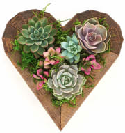 As one of its daily deals, Amazon takes up to 30% off a selection of Shop Succulents Valentine's Day Plants. Plus, Prime members bag free shipping