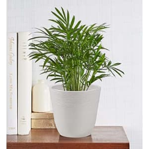 Plants at 1-800-Flowers: 20% off