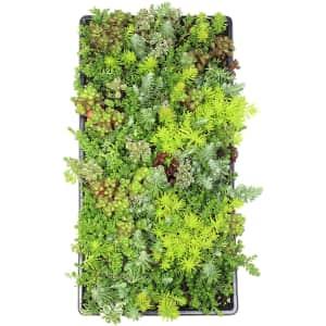 Plants for Pets Live Sedum Succulent Planter for $28