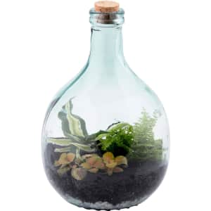 Esschert Design 5L Glass Bottle Terrarium Starter Set w/ Tools for $30