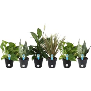 Costa Farms Clean Air Live House Plant Collection 6-Pack for $32