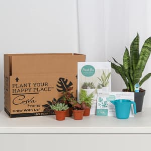 Costa Farms O2 For You Live Indoor Plant and Succulent-Cactus Mix Subscription Box for $24 for first box
