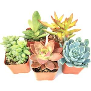 Plants for Pets Live Succulent Plant 5-Pack for $15