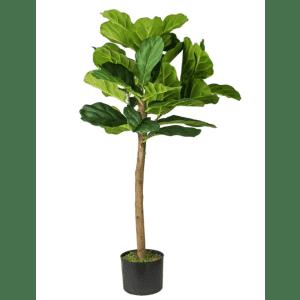 3-Foot Fiddle Leaf Fig Tree in Pot for $40