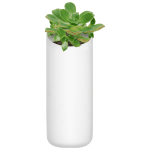 Urbio String Bean Wall Planter for $9