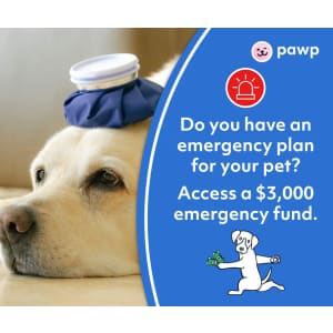 Pawp Pet Care: $3,000 Emergency Protection Plan for $19/mo.