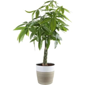 Costa Farms Live Plants at Amazon: Up to 23% off