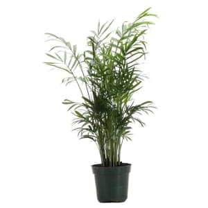 Live Plants at Wayfair: from $8