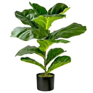 """30"""" Fiddle Leaf Fig Bush in Pot for $39"""