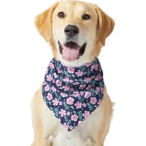 End of Season Pet Apparel at Chewy: up to 60% off summer styles