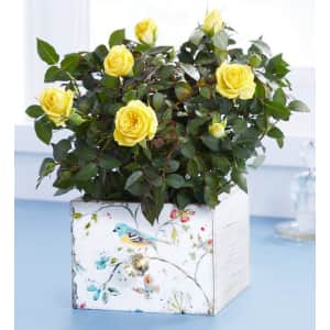 Plant Gifts at 1-800-Flowers: from $30