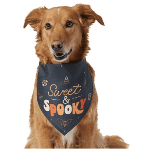 Halloween Pet Deals at Chewy: Discounts on costumes, toys, treats, and more