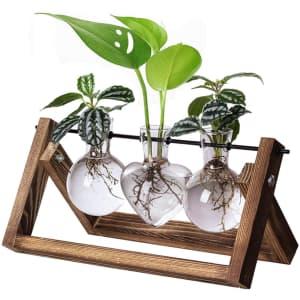 XXXFlower 2-Shape Bulb Vase Plant Terrarium Set for $10