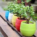 Colourful Mini Round Plastic Plant Flower Pot for $1 + free s&h from HK