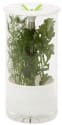 Honey-Can-Do Glass Herb Preserver for $20 + free shipping w/Prime