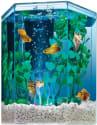 Tetra 1-Gallon Hexagon Aquarium Kit for $13 + free shipping w/ Prime