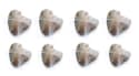 8 Oysters w/ 6-7mm Natural Pearls Inside for $35 + free shipping