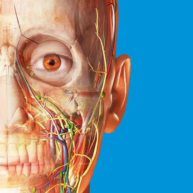 Human Anatomy Atlas 2018 for iPhone / iPad for $1