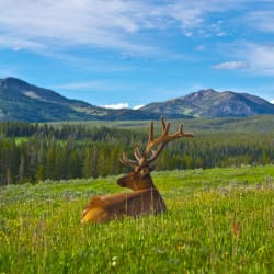 National Park Week is Coming! Here's How to Score Free Visits