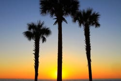 Hotels & Condos in Sanibel Island, FL from $114/nt