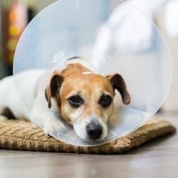 Should You Buy Pet Insurance in 2019?