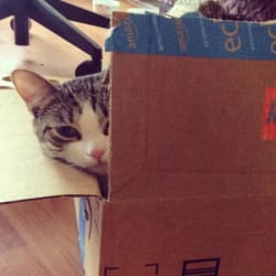 How I Save $600 a Year on Cat Food Using Amazon Prime