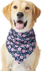 End of Season Pet Apparel at Chewy: up to 60% off summer styles + free shipping w/ $49