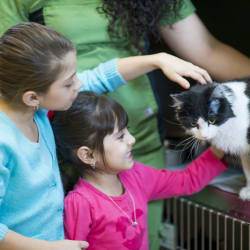How Much Does It Cost to Adopt a Pet?