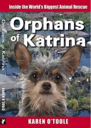 "K. O'Toole ""Orphans of Katrina"" Kindle eBook: free"