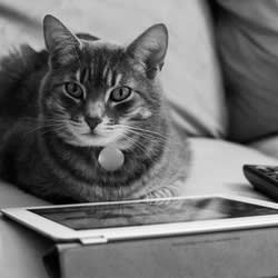 Cat Stole Your iPad? Here Are 5 Editors' Choice Tablets to Replace It
