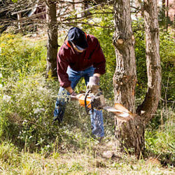 Power Tools for the Garden: From Chainsaws to Leaf Blowers
