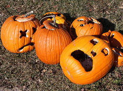 How to Survive the Pumpkin-O'Calypse of 2011
