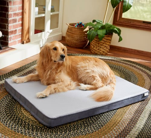 Pet Beds at Chewy: Up to an extra 50% off + free shipping w/ $49