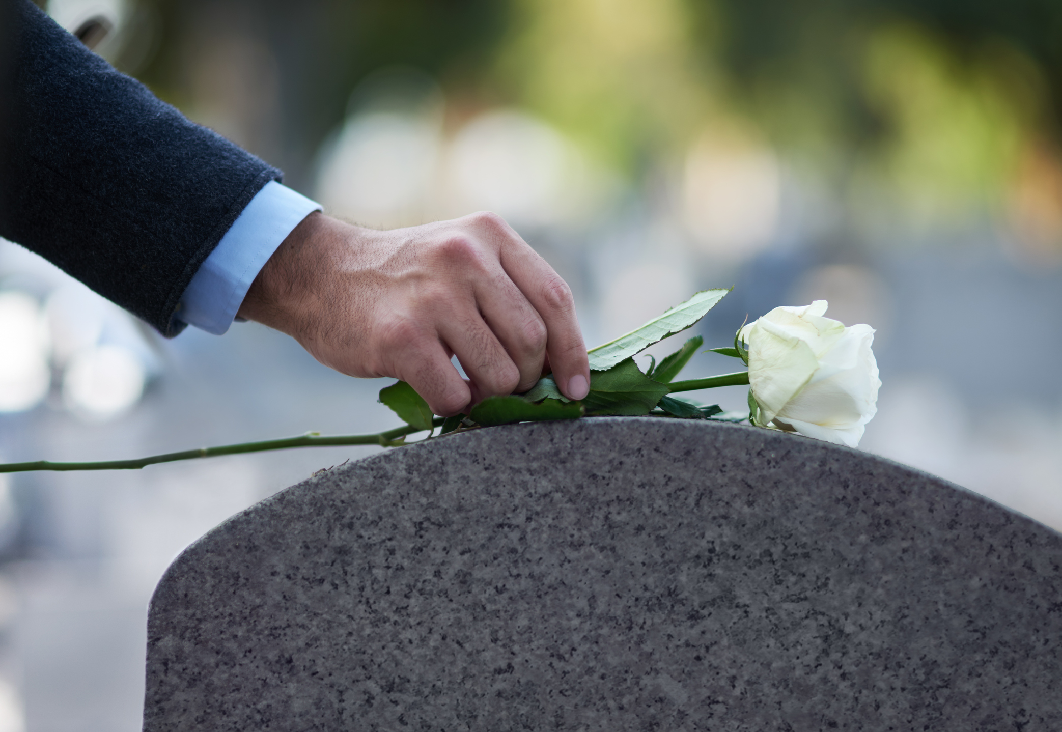 putting flower on grave